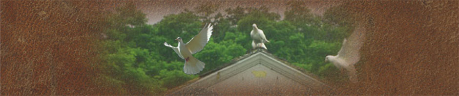 Dovecot: The doves are coming soon!