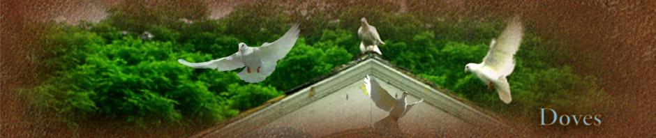 Lonesome Dove at Spirit Horse Farm!