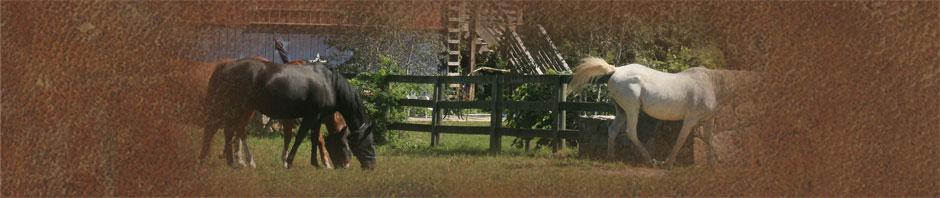Equestrian Scene, Last Ride Spirit Horse Farm